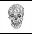 drawing of skull on white vector image vector image