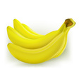 fresh banana vector image vector image
