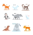 Arctic and Antarctic Animals Penguin vector image vector image