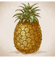 engraving pineapple retro style vector image vector image