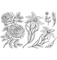 flowers set roses with leaves and buds and lily vector image vector image