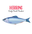 herring i vector image