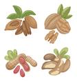 nuts2 vector image vector image
