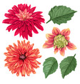 red asters flowers set tropical floral elements vector image