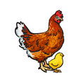 hand drawn brown hen and little yellow newborn vector image