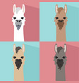 alpaca lama portrait flat style vector image