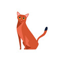 cartoon abyssinian cat breed flat vector image