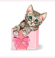 cute cat in a pink gift box kitten wall sti vector image vector image