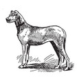 great dane vintage vector image
