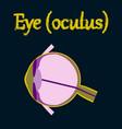 human organ icon in flat style eye vector image