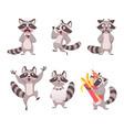 raccoon characters cartoon funny wild animal vector image