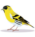 siskin bird vector image vector image