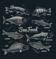 sketch fishes seafood herring trout flounder vector image