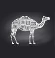 camel dromedary scheme diagram chart pork vector image