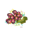grapes with colorful splashes vector image vector image