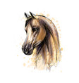 horse head portrait from splash watercolors vector image vector image