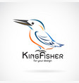 kingfishers birdalcedo atthis on white background vector image vector image