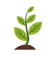 plant sapling growing natural botanical image vector image vector image