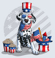 Cute dalmatian dog 4th july elements