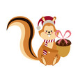 cute squirrel with acorn christmas hat cartoon vector image vector image