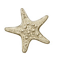 hand drawn sketch starfish in color isolated vector image
