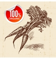 Hand drawn sketch vegetable carrots Eco food vector image