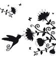kolibri vector image vector image