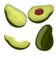 avocado set on white background vegetarian oils vector image