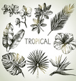 hand drawn sketch tropical plants set vector image vector image