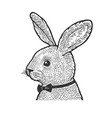 rabbit in bow tie sketch vector image
