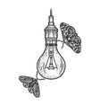 butterflies fly around lamp sketch vector image