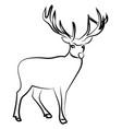 deer sketch on white background vector image vector image