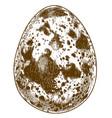 engraving quail egg vector image vector image