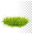 tussock of green grass vector image vector image