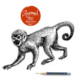 Hand drawn monkey animal Sketch isolated ma vector image