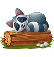 cartoon raccoon sleeping on the tree log vector image vector image