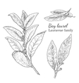 Ink bay laurel hand drawn sketch vector image vector image