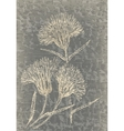 Monochrome cornflowers on grunge texture vector image