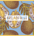 breadfruit background vector image vector image