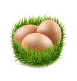 eggs set with grass vector image