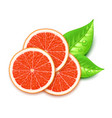 grapefruit slice vector image