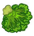 vegan broccoli icon cartoon style vector image
