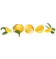horisontal fruit decor line set with orange fruit vector image vector image
