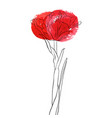 drawing flower of tulip vector image