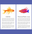 filamented flasher wrasse and gold fish posters vector image vector image