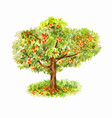watercolor apple tree isolated on white vector image vector image