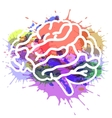 brain on watercolor background vector image