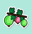 gooseberry sticker on blue background colorful vector image