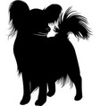 papillon dog vector image