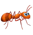 An ant vector image vector image